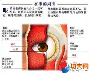 人体要害部位―眼睛