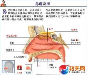 人体要害部位―鼻梁